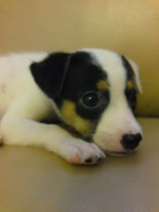 cute pup 2nd chance