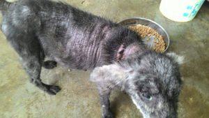 Karina 2nch chance animal society