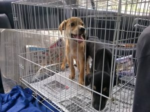 2nd chance SPCA adoption