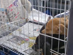 SPCA adoption 2nd chance
